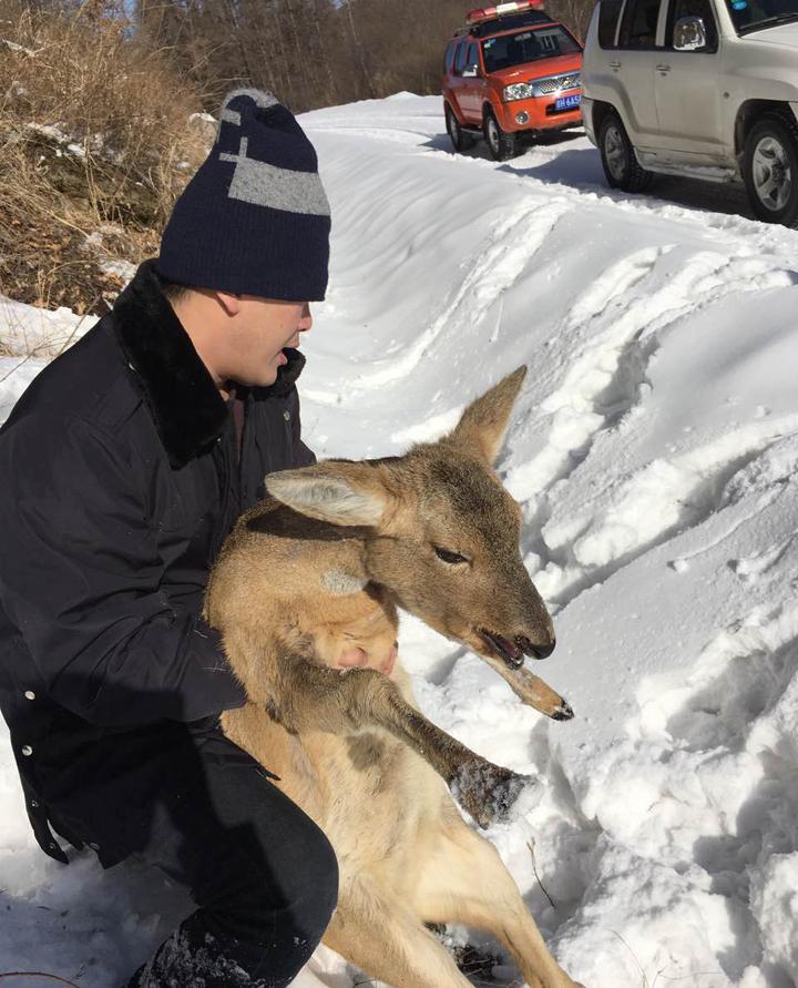 【天桥岭林业】受伤动物巧遇动物保护工作人员 得到了