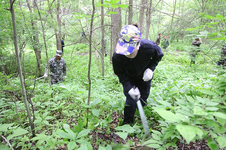 局机关组织党员干部到基层林场开展森林抚育工作.jpg