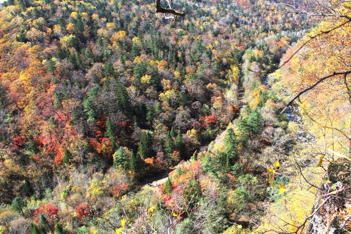 2 俯瞰秋天五彩斑斓的兰家大峡谷国家级森林公园.jpg