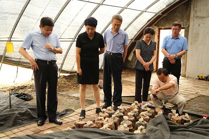 10调研组在亚光湖转型发展基地参观桑黄种植棚户1.jpg